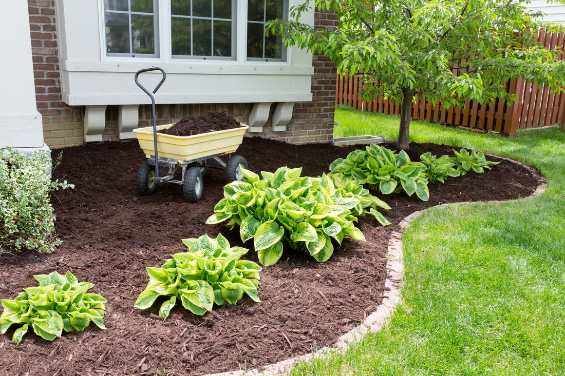 A flower bed with some fresh mulch applied to cover the soil