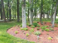 A natural area in need of some new mulch