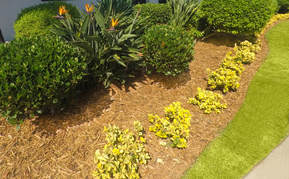 A freshly mulched flower bed that has received proper shrub and tree care