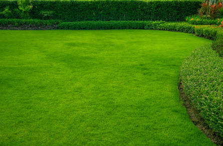 Augusta Lawn Care and Maintenance is here to help you enjoy your lawn again.  Call today for your free quote!